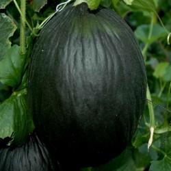 Crna Dinja Seme 2.45 - 3