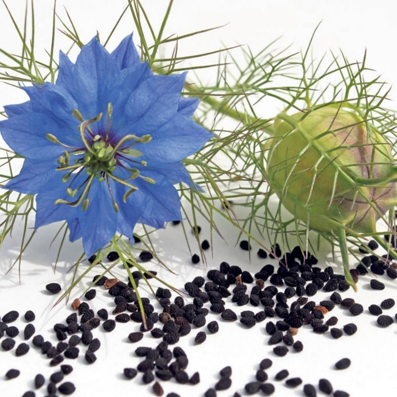 Echte Schwarzkümmel Samen (Nigella sativa) 2.45 - 1