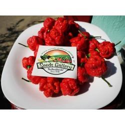 Trinidad Moruga Scorpion Seeds Worlds Hottest 1.95 - 3