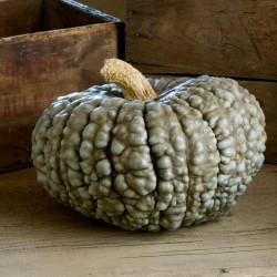 Sementes de abóbora MARINA DI CHIOGGIA 1.99 - 2