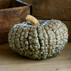 Semi di Zucca MARINA DI CHIOGGIA 1.99 - 2