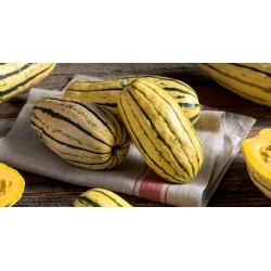 Semi di Zucchino DELICATA 2 - 3