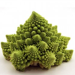 Graines Chou fleur vert Romanesco 2.75 - 1