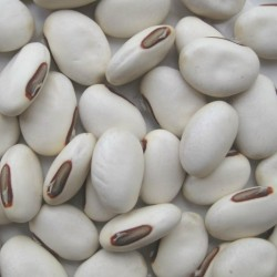 """Japanese Giant White Sword Bean seeds """"Shironata Mame"""" 1.95 - 1"""
