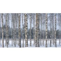 Birken Samen (Betula) 1.95 - 4