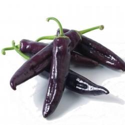 Σπόροι γλυκιά πιπεριά MARCONI PURPLE 1.65 - 1