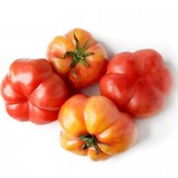 Sementes De Tomate Montserrat 1.95 - 2