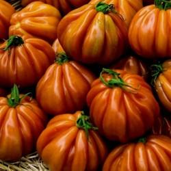 Graines de Tomate CHARLIE CHAPLIN 1.95 - 1