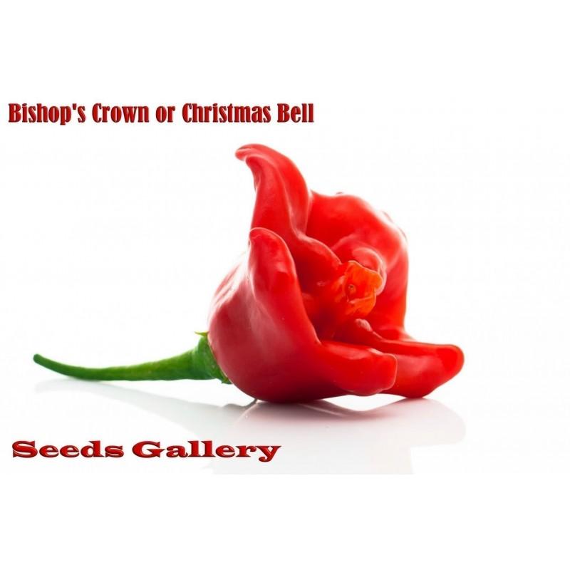 Σπόροι Τσίλι - πιπέρι Bishops Crown - επίσκοπος κορώνα
