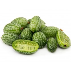 Cucamelon Seme Meksickog Krastavca 1.85 - 1