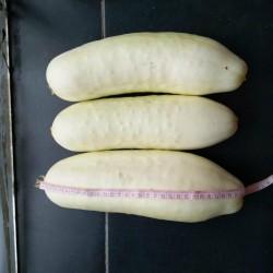 Semente de Pepino Branco 1.8 - 1