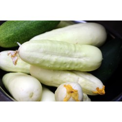 Cucumber Seeds White Wonder 1.8 - 2