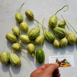 Σπόροι Ινδικο Αγγουρακι (Cucumis anguria) 1.85 - 2