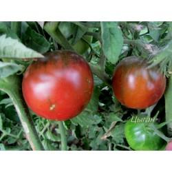 Gypsy Tomato Seeds 1.65 - 3