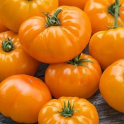Sementes de tomate Laranja Beefsteak 2.15 - 1