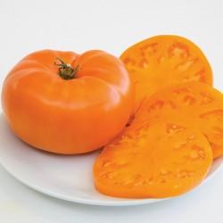 Orange Beefsteak Heirloom Tomato Organic Seeds 2.15 - 3