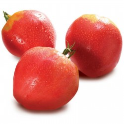 Tomato Seeds VAL Variety from Slovenia 2 - 1