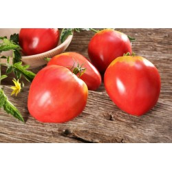 Tomato Seeds VAL Variety from Slovenia 2 - 3