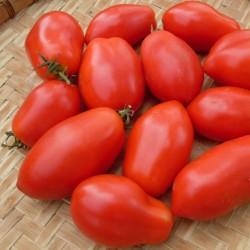Napoli Tomato Seeds 1.85 - 2