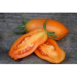 Orange Banana Tomato Seeds 1.85 - 3