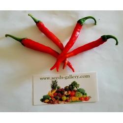 Sementes de Pimenta Cayenne Long Slim - Cayenne longo e fino