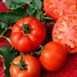Semillas de Tomate Saint Pierre 1.5 - 4