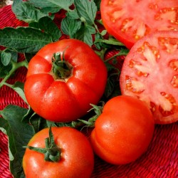 Ντομάτα σπόροι Saint Pierre 1.5 - 4