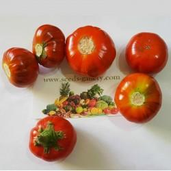 Aubergine Samen TURKISH ORANGE (Solanum aethiopicum) 1.95 - 2
