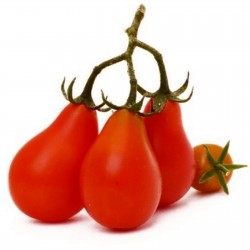 Red Pear, Rotes Birnchen Tomate Samen 1.9 - 1