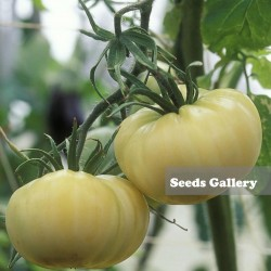 Sementes de Tomate Maravilha Branca 1.65 - 2