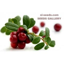 Brusnica Seme - Cranberry (Vaccinium macrocarpon)