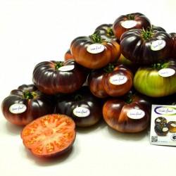 Graines de tomate Mar Azul 1.75 - 1
