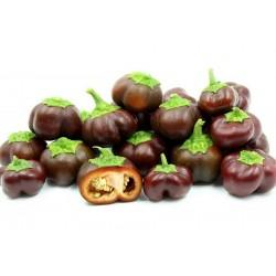 Sweet Pepper Seeds MINI BELL Chocolate 1.95 - 1