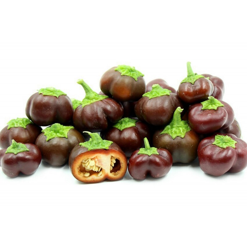 Seme Slatke Cokoladne Paprike MINI BELL 1.95 - 1