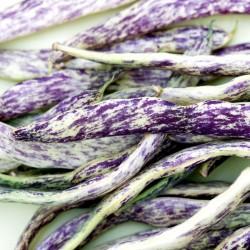 Semi di Fagiolo Merveille de Piemonte 2.5 - 3
