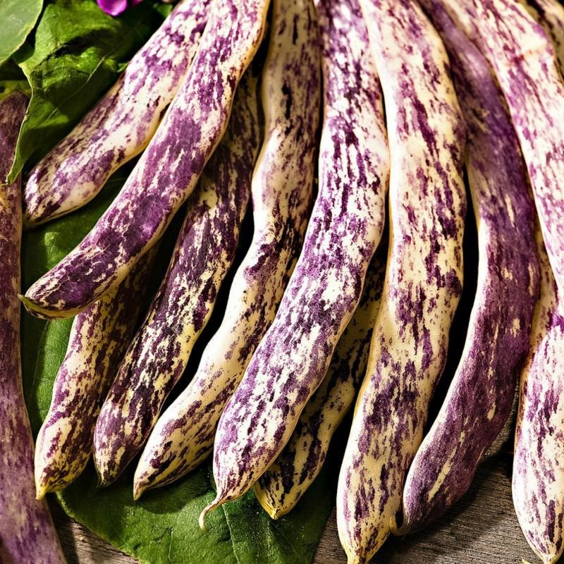 Sementes de Feijão Merveille de Piemonte 2.5 - 1