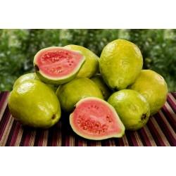 Semi di Guava (Psidium guajava) 1.8 - 4
