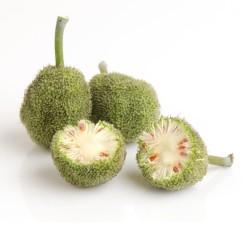 Papiermaulbeerbaum Samen 1.55 - 2