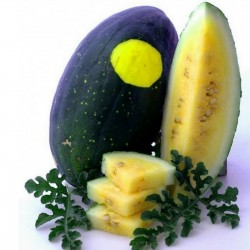 100 Seeds Yellow Fleshed Watermelon Moon and Stars 10 - 6