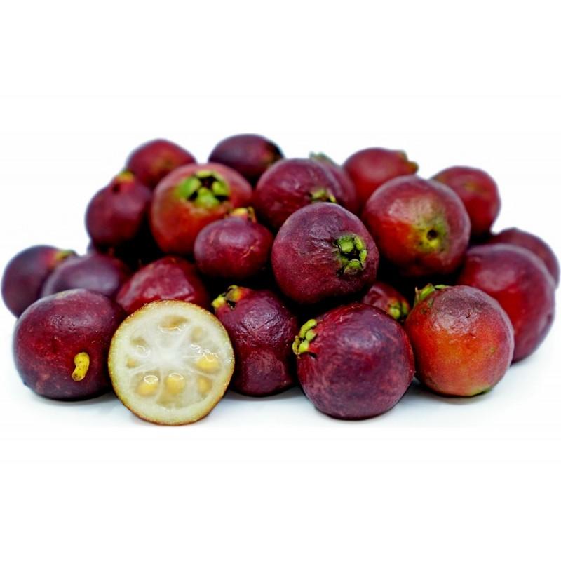 Strawberry Guava Seeds (Psidium cattleianum) 1.5 - 1