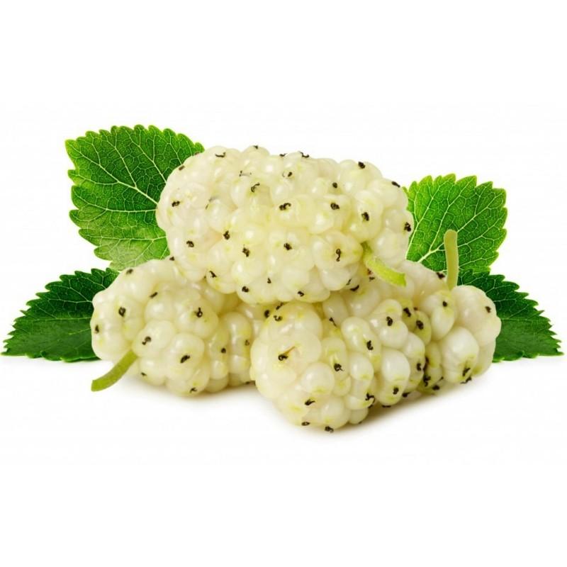 Semi di Gelso Bianco frutti deliziosi (Morus alba) 1.95 - 1
