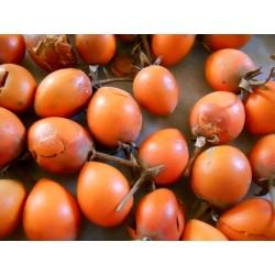 Spanish Cherry Seeds 2.95 - 3
