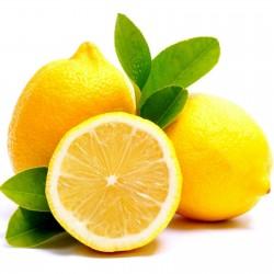 Sementes de Limão - limão-siciliano - limão-verdadeiro 1.95 - 1