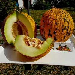 Semi di melone TESTA DORATA o semi Tracia melone - Miglior Melon greca 1.55 - 1