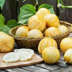 Sementes De Pepino Limão 1.95 - 2