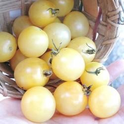 Σπόροι Ντομάτα White Cherry 1.95 - 1