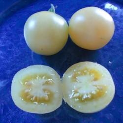 Semi di pomodoro Bianco Cherry 1.95 - 2