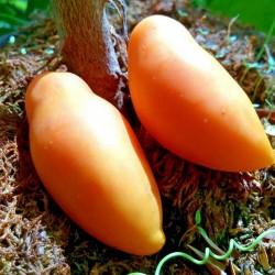 Σπόροι ντομάτας Tschuchloma 1.85 - 1