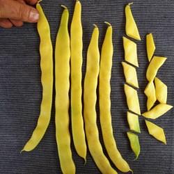 Σπόροι Φασόλι κίτρινο Meraviglia di Venezia 1.85 - 2