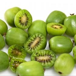 Sementes De Actinidia Arguta - Baby Kiwi Resistentes geada -34C 1.5 - 3